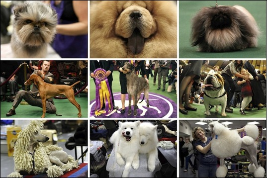 135th_westminster_kennel_dog_show_2011