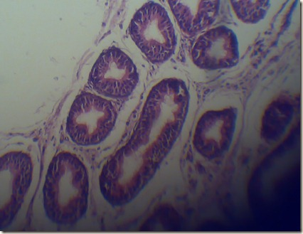 Stereo cilia high magnified under microscope