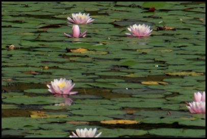 On Jordan Pond 153