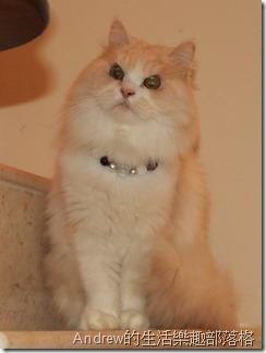 姨婆家的貓