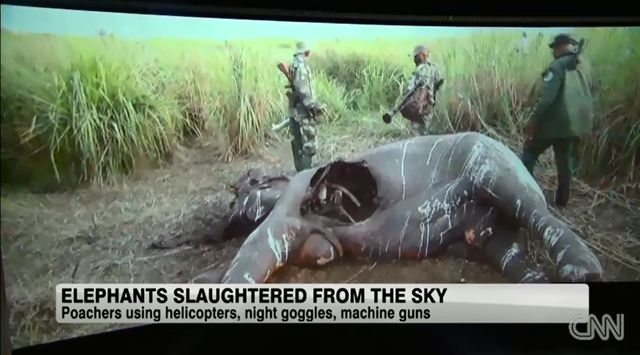 Screenshot of Christiane Amanpour's coverage of elephant slaughter by poachers, 27 September 2013. Photo: CNN