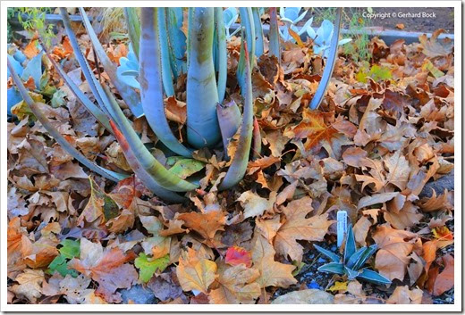 131122_home_leaves_15
