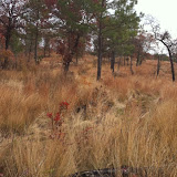 Hunting Habitat 1, Anderson Creek