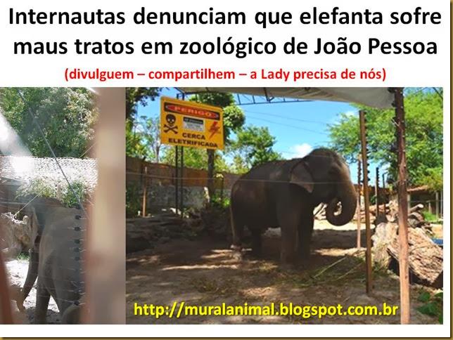 Internautas denunciam que elefanta sofre maus tratos em