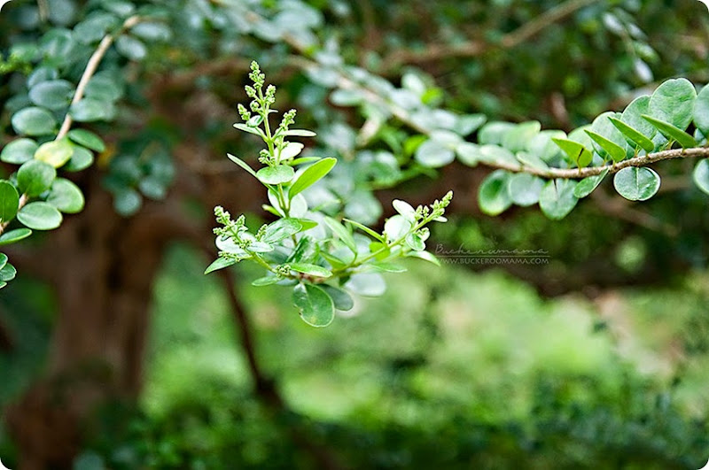 Green-(1)