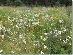 PrairieWildflowers