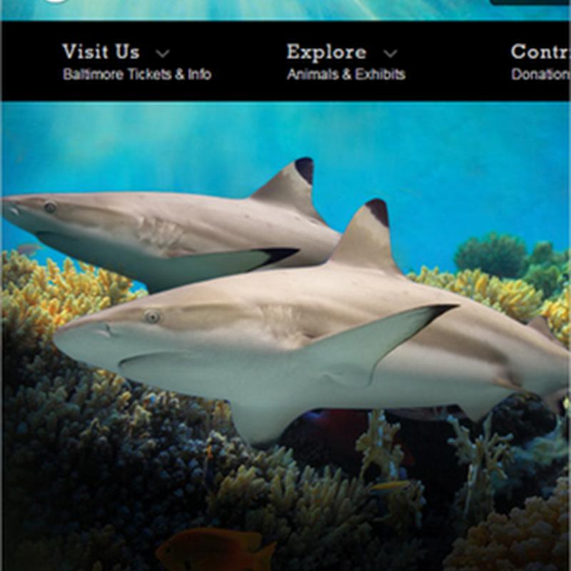 Diseños de sitios web enfocados a zoológicos y acuarios