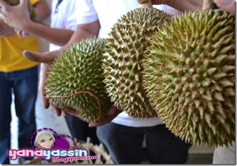 Durian Musang King301_DSC_3051Karak