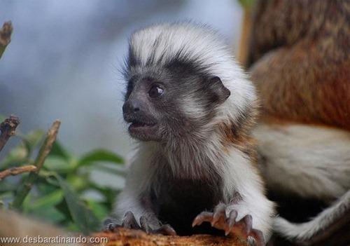 filhotes recem nascidos zoo zoologico desbaratinando animais lindos fofos  (13)