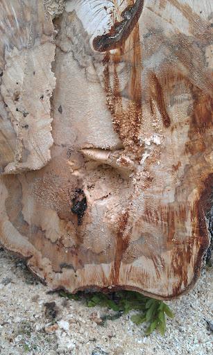 Chestnut Tree Rosendale Road