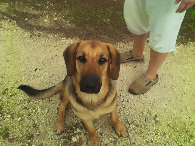 Χάθηκε σκύλος στην Πεσσάδα
