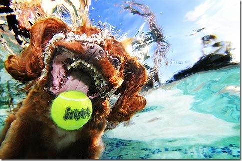 underwater_dog1