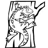 wid1kdazgg0bxomizinwpf3y_Pet-Iguana.jpg