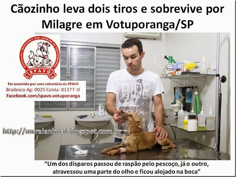 Cãozinho leva dois tiros e sobrevive por Milagre