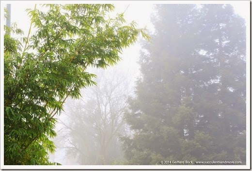 141223_fog_004