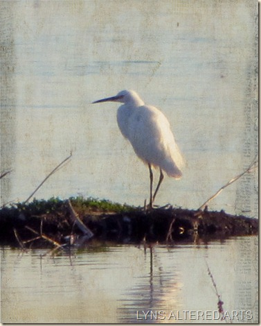 Egret with kk simplicity multiply 75