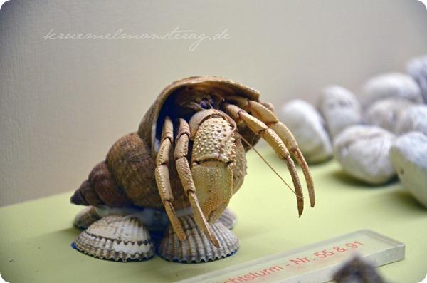 Wremen 20zwölf Tag 5 Muschelmuseum (24)
