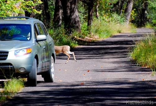 1. deer-kab