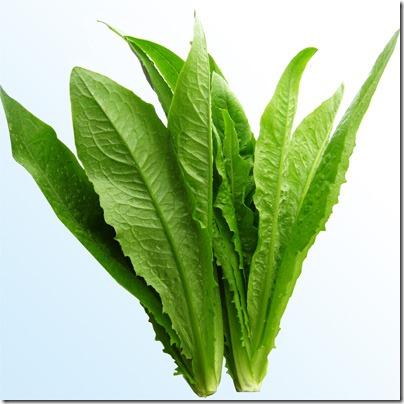 08 油麥 - Yao Mak - long leaf lettuce