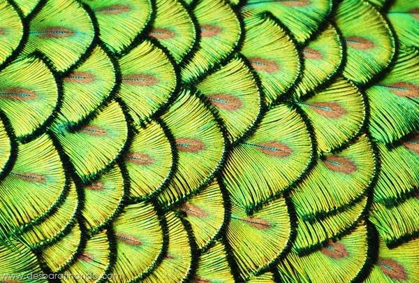 natureze-nature-padrao-pattern-desbaratinando (9)