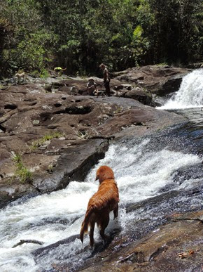 Dogs Trekking 6 (278)