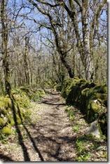 Magnifique chemin bordé de murets en pierres séches.