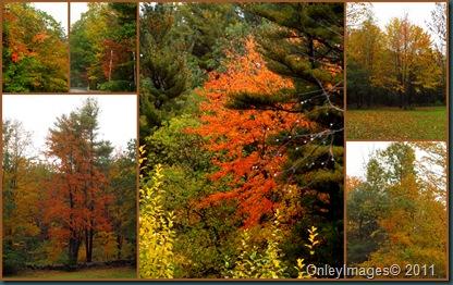 foliage collage1014