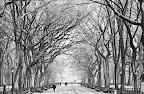 December in Central Park.jpg
