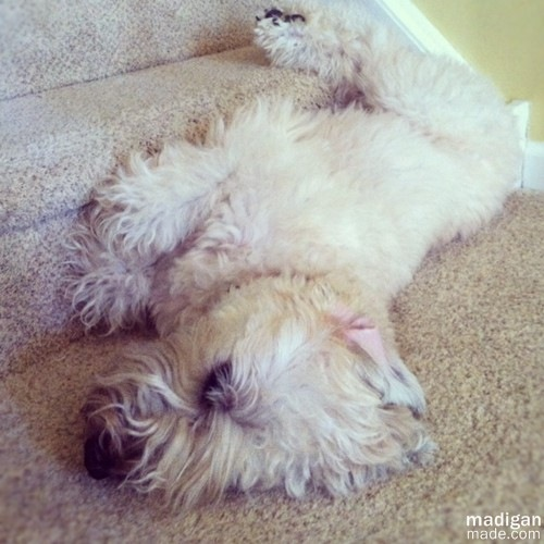 cute dog laying on steps