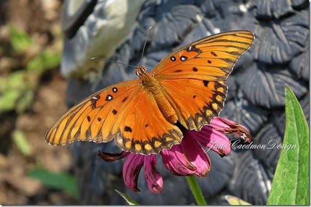 Gulf_Fritillary_Butterfly