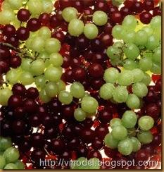 Высокие урожаи винограда 2