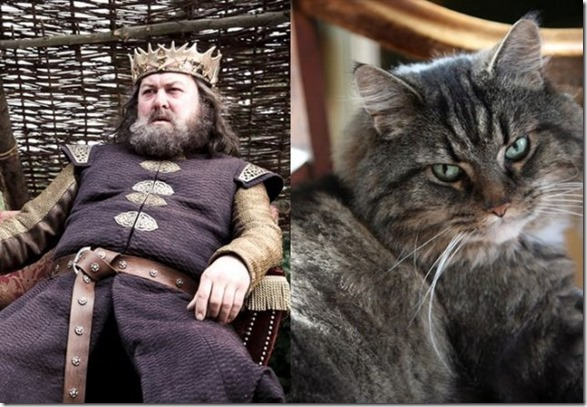 cats-game-thrones-1