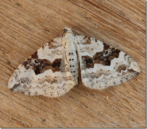Silver-ground-carpet