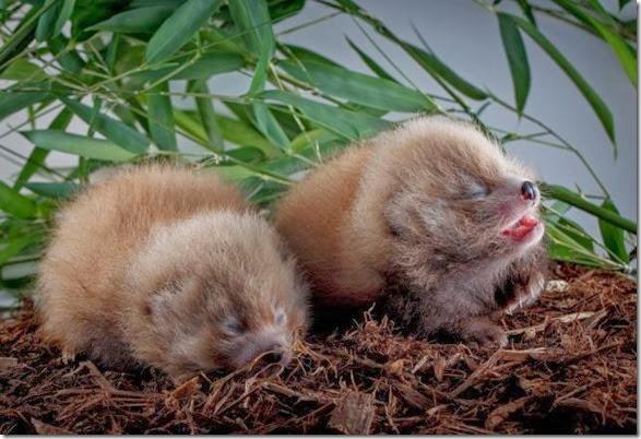cute-baby-animals-31