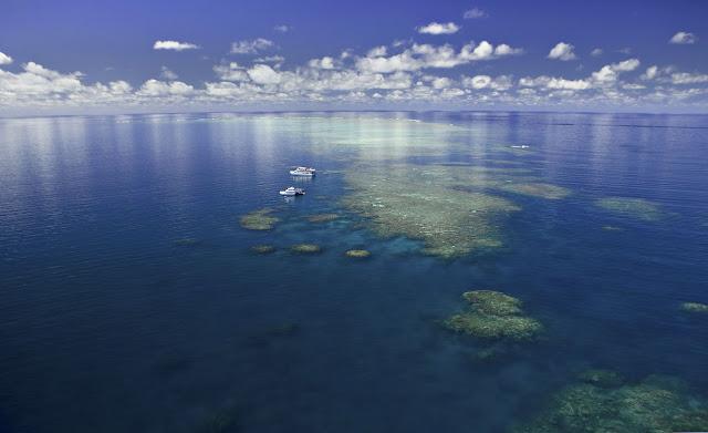 Reef Encounter & Reef Experience Great Barrier Reef Australia.JPG