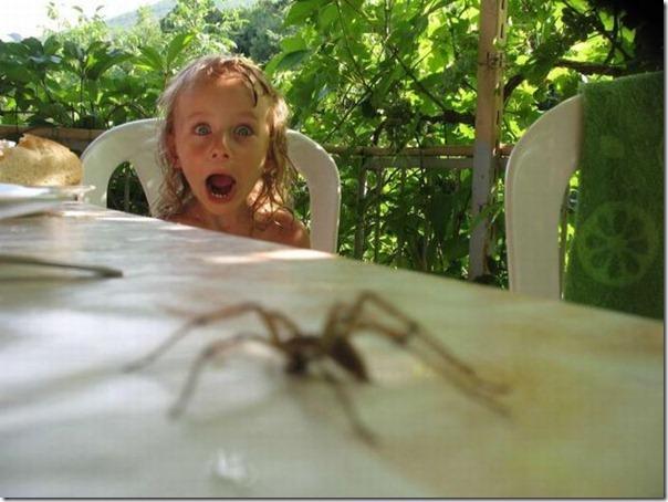 Compartilho do mesmo desespero ao ver aranhas
