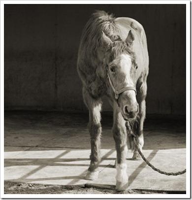 Isa_Leshko_Handsome_One_Thoroughbred_Horse_Age_33