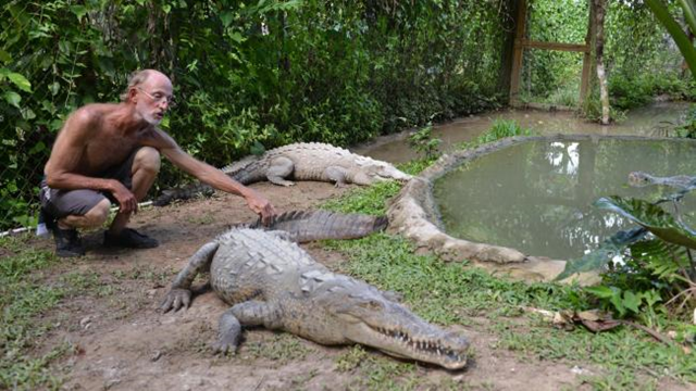 In this 29 September 2013 photo, crocodile enthusiast Lawrence Henriques pats the tail of a seven-foot female crocodile at a sanctuary and captive rearing program he founded in the mountain town of Cascade in northern Jamaica. Photo: David McFadden / AP