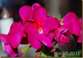 blomster september 2011 024