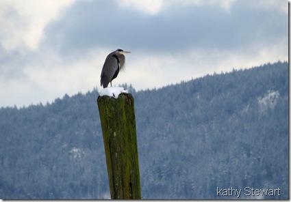 Heron on a post