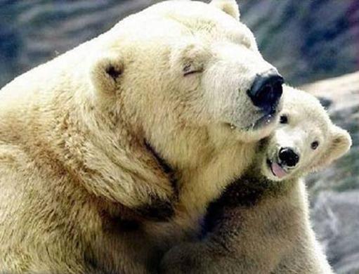 Я тебя люблю, мама!