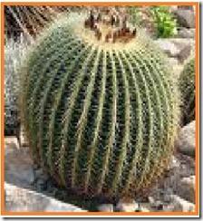 kaktus[2]