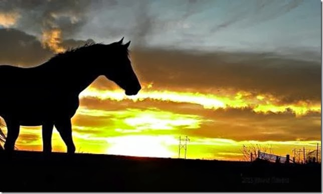 Sunset horse silhouette For what it's worth