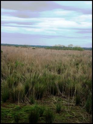 Bolen Bluff Trail-Spring Equinox 026