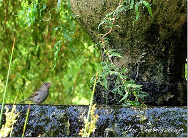 Sparrow_Fountain
