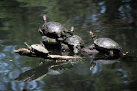 Turtles! Photo