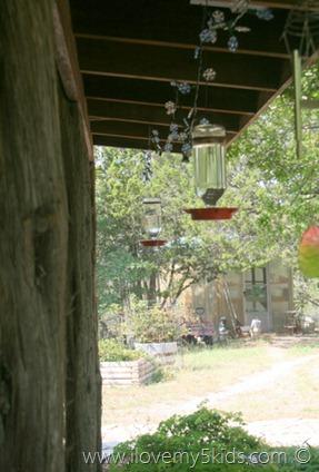 The best Hummingbird feeders