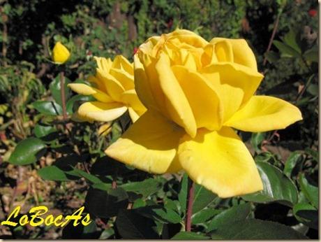 floresamarillas-LoBocAs-00