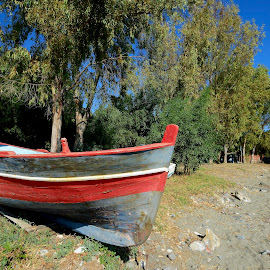 the boat in the grove  by Carmelo Parisi - Transportation Boats