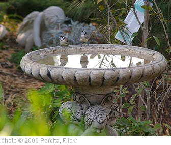 'Double barred finches in the bird bath' photo (c) 2006, Percita - license: https://creativecommons.org/licenses/by-sa/2.0/